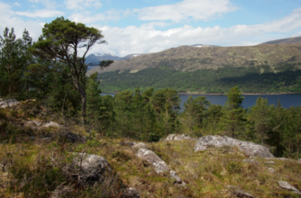 The long-distance course used for last year's men's World Orienteering Championships in the Scottish Highlands has been named as the best of 2015 ©EventScotland
